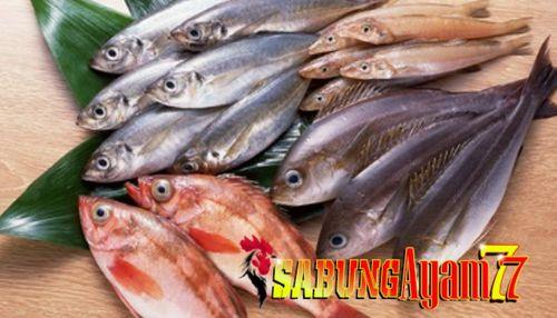Apakah Ikan Dianggap Daging? Saat ini ada berbagai jenis